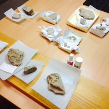A selection from the day's conservation rounds. Labelling and cataloguing new specimens, supplemented by hours at the microscope; hunting for unique descriptive features on the fossil leaves and cones, or microscopic remains of insects that lived in the 95 million year old polar forest in which these rocks formed.
