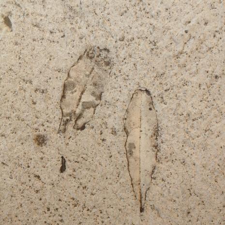 Banksia trace fossil in concrete no. 1