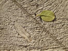Unknown leaf trace in concrete