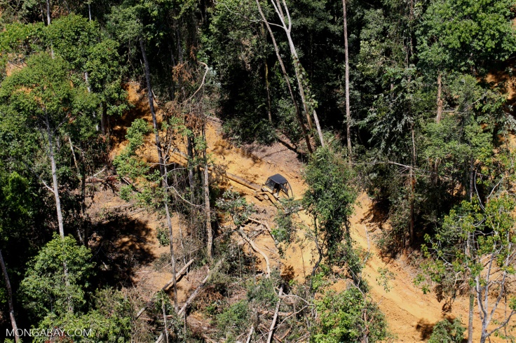sabah_aerial_0715: Tropical forest degradation for timber production in Borneo